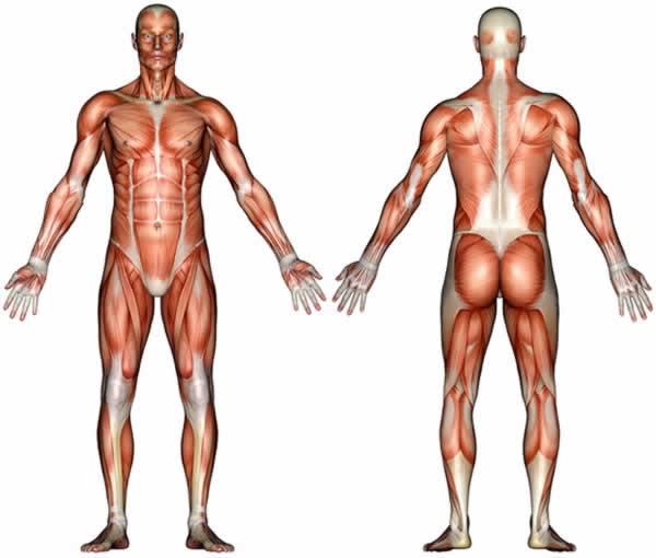 人体解剖大全