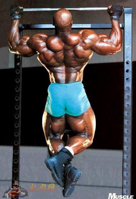 背阔肌_施瓦辛格引体向上训练法则_肌肉网