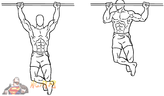 完美背部锻炼计划_肌肉网