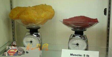 人体脂肪_健身新闻             减肥不能只看体重,因为人体体重由脂肪重量和去