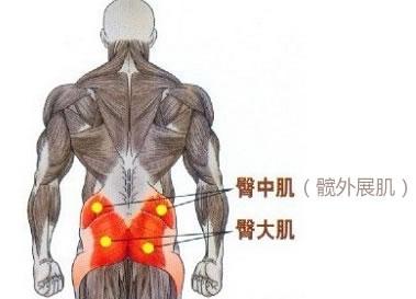 臀部关节结构示意图