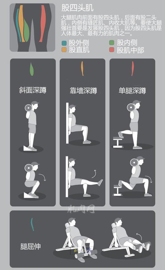 背部健身_下肢肌肉锻炼动作图解_肌肉网