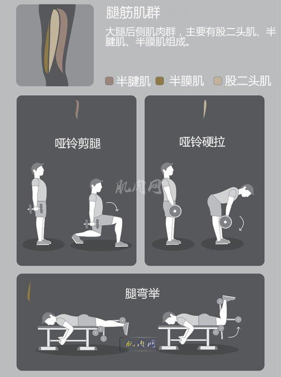 背部健身_下肢肌肉锻炼动作图解_
