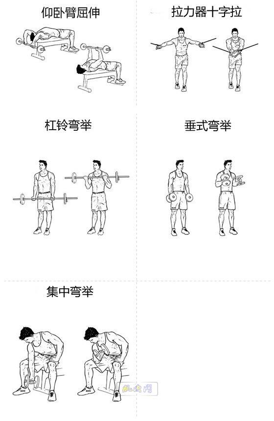 哑铃胸肌腹肌_大胸肌和二头肌的基础锻炼动作_肌肉网