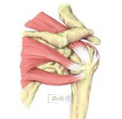 肩袖肌群锻炼方法:10个动作